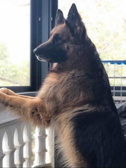 משפחתו של ברוס מבקשת עזרת הציבור בחיפוש אחר אלמונים שהרעילו את הכלב בחצר הבית באגרון