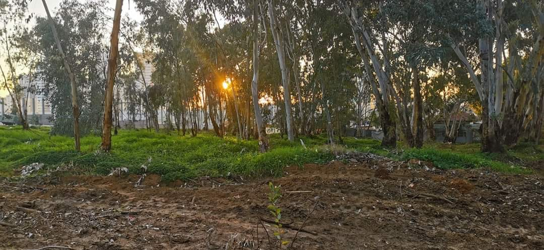 יער אוסישקין המתחדש