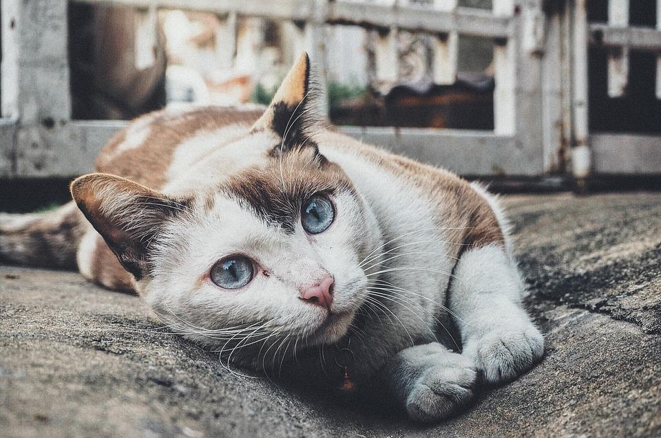 לא שוכחים אף אחד – כפר סבא ורעננה דואגות לחתולי העיר!